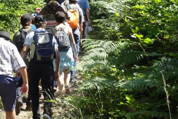 Début de la m'Arche dans la forêt : oohh hisse c'est Archi grimpant !